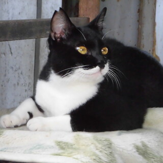 多頭飼育の保護猫の里親募集中