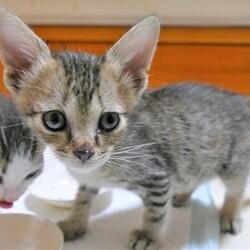 猫の譲渡会in神戸三宮 ¨ 猫のミーナ ¨ サムネイル3