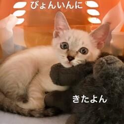 おきなわ美ら猫❤譲渡会 in 天白区 サムネイル3