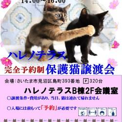 【完全予約制】9/20(祝)ハレノテラス保護猫譲渡会 サムネイル1