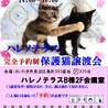【完全予約制】9/20(祝)ハレノテラス保護猫譲渡会