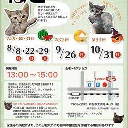 猫の譲渡会in芦屋