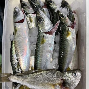 お魚パーがイマイチ盛り上がらない 雷ジイ(ーー;) 体調かな?いえいえ 単純に興味のある魚が無かった!熟成イシモチに燃え上がる!