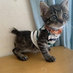 猫の譲渡会@猫の保健室むーちょ サムネイル3