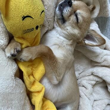 お気に入りのおもちゃで遊んで寝落ち…(笑)