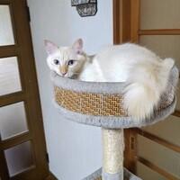 保護猫 バイデン