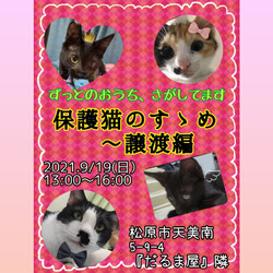 保護猫のすゝめ ~譲渡編~