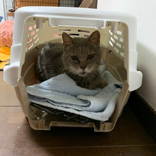 9/8更新『しきぶ』老猫で寝ているだけノンビリ