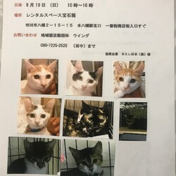 9/19市川市地域猫活動団体ウイング譲渡会