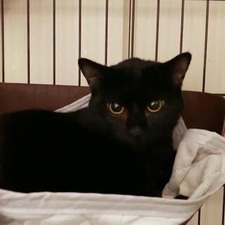 小心者だけど本当は甘えん坊の黒猫くん