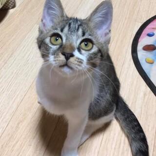 瞳キラキラ輝くステラちゃん。4ヶ月の女の子。