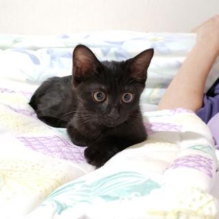 丸いお目めがキュートな黒猫仔猫