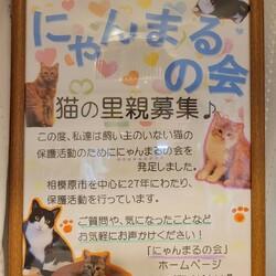 9/12日(日)保護猫の譲渡会を開催します♪