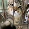 人懐っこいキジトラ子猫