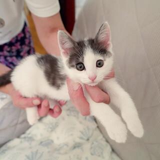 シロクロ子猫5匹の里親を募集しています。