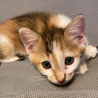 cuteな甘えん坊⭐️ミケ縞女の子双葉