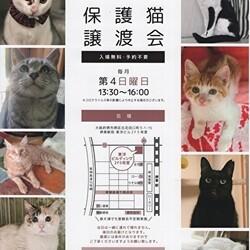 第32回 Cat First 譲渡会開催のお知らせ
