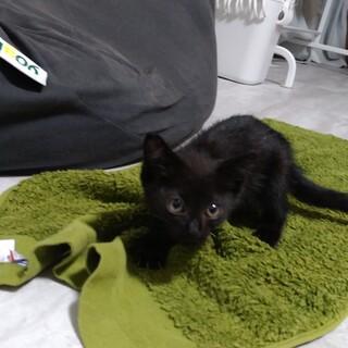 【香川県高松市】黒子猫の里親募集中