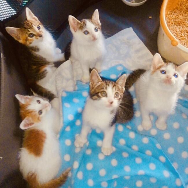 鎌倉猫らいんのカバー写真