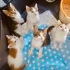 鎌倉猫らいん