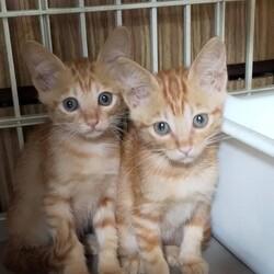 三重県桑名市 9月19日(日)第119回リトルパウエイド猫の譲渡会