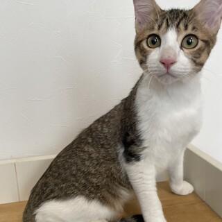 多頭飼育崩壊・飼育放棄の保護猫です