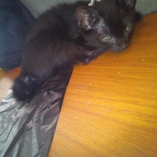 可愛い黒猫の女の子の里親を募集してます