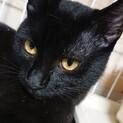 【ギガ】おしゃべりな小柄黒猫男子
