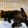 【ギガ】おしゃべりな小柄黒猫男子 サムネイル2