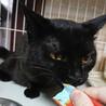 【ギガ】おしゃべりな小柄黒猫男子 サムネイル5