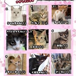 保護猫の譲渡会in守山 サムネイル2