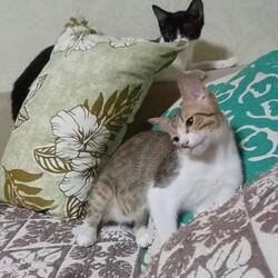 保護猫の譲渡会in守山 サムネイル3