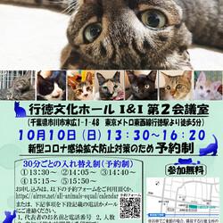 【千葉県市川市】イコール保護猫譲渡会vol.10