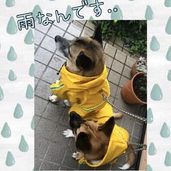 雨なんです・・