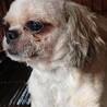 繁殖引退犬です サムネイル2