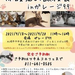 <札幌市>猫の譲渡会