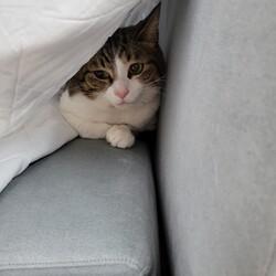 里親として迎えた猫さん