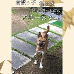倉敷っ子福田犬レディースの幸せだより