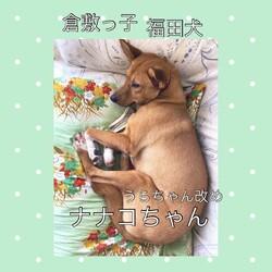 「倉敷っ子福田犬レディースの幸せだより」サムネイル2