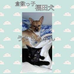 「倉敷っ子福田犬レディースの幸せだより」サムネイル3
