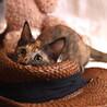 とってもキュートなサビ猫 なつちゃん サムネイル2