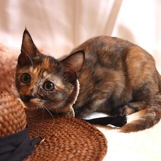 とってもキュートなサビ猫 なつちゃん