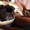 とってもキュートなサビ猫 なつちゃん サムネイル6