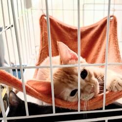 おきなわ美ら仔猫❤譲渡会 in 緑区 サムネイル1