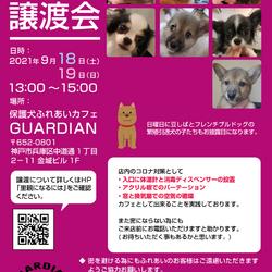 保護犬ふれあいカフェGUARDIAN 譲渡会 サムネイル1