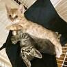 色違いが可愛い子猫の兄弟♪ (二匹とも男の子)
