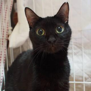 【わわにゃん】小柄な黒猫さん