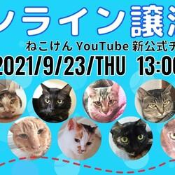 ねこけん★YouTube LIVE譲渡会! サムネイル2