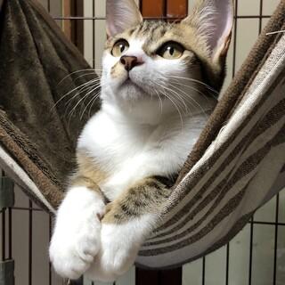 賢く穏やかなクールビューティーな子猫です。