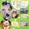 猫の譲渡会 in日吉台1番町集会所